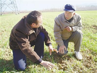 拔尖人才服务农业生产